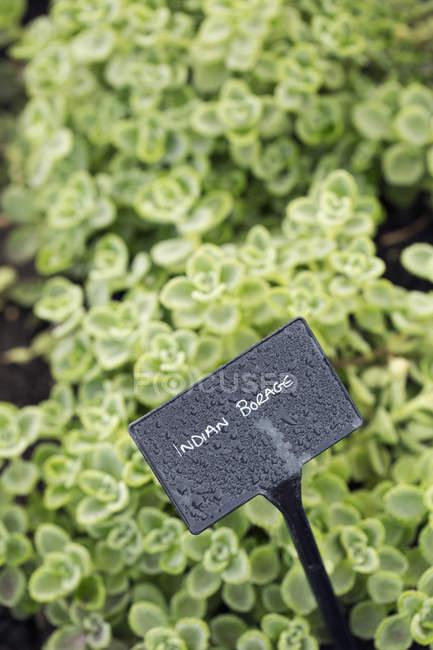 Растения, растущие в овощной сад — стоковое фото