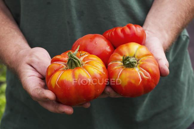 Человек с помидорами . — стоковое фото