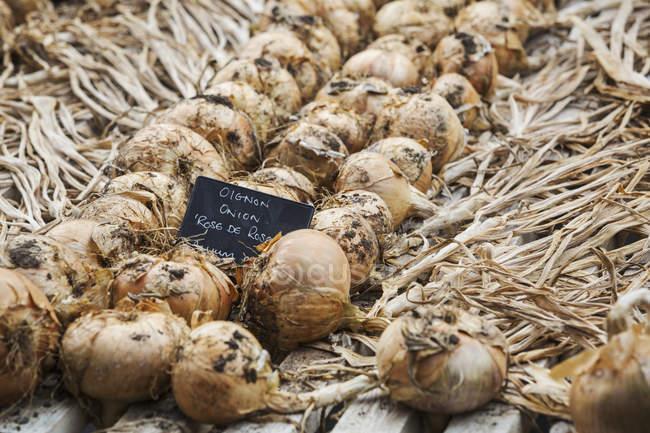 Cipolle sul cassetto di legno — Foto stock