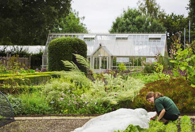 Женщина, садоводства парниковых — стоковое фото