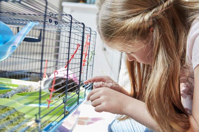 Menina olhando para uma gaiola do animal de estimação — Fotografia de Stock