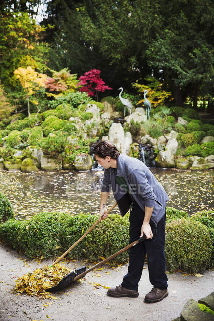 Homem, ajuntando as folhas no caminho — Fotografia de Stock