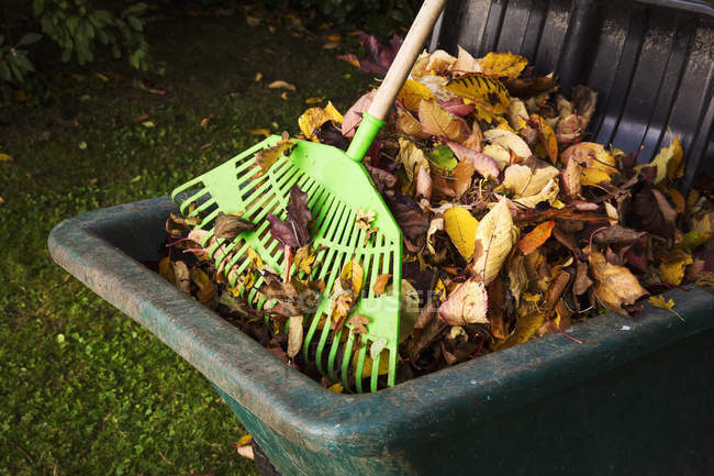 Rake and bin of autumn leaves — Stock Photo