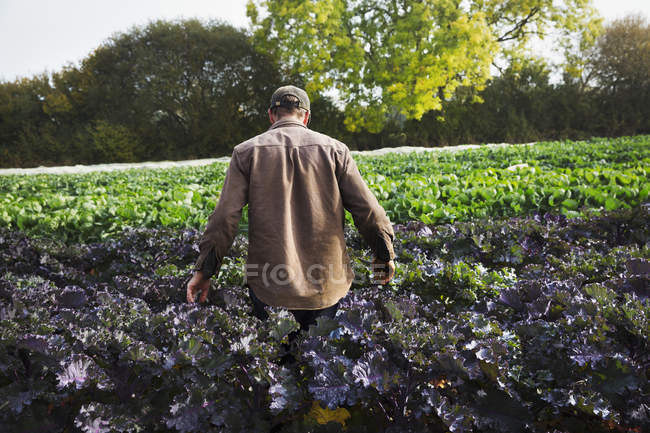 Uomo che cammina attraverso un campo — Foto stock