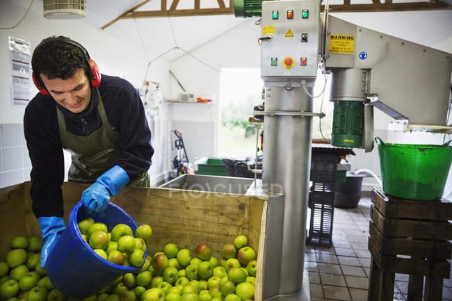 Man scooping apples — Stock Photo