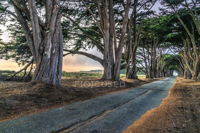 Проспект дерев, що ростуть на дорозі — стокове фото