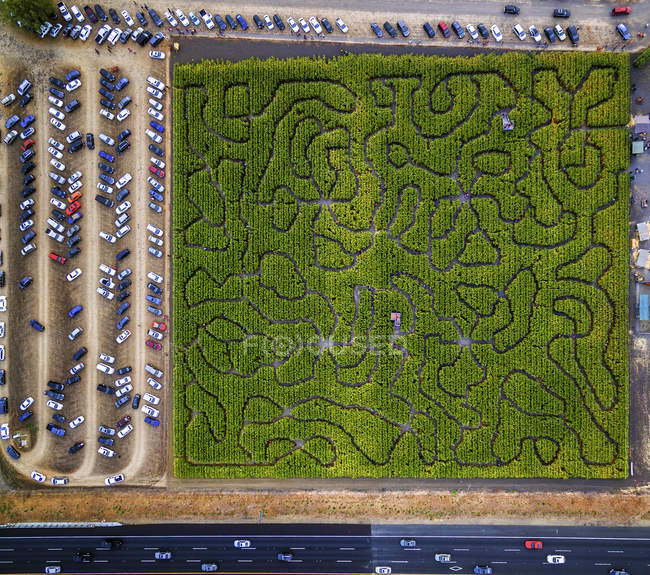 Aerial view of Corn Maze — Stock Photo