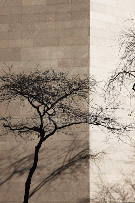 Tree at corner of building — Stock Photo