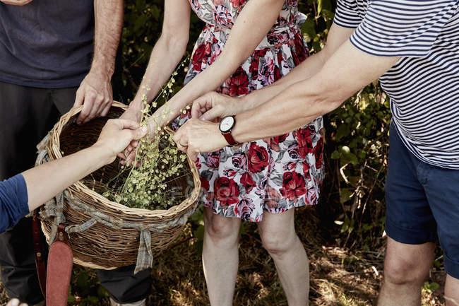 Gruppo di persone raccolte piante — Foto stock