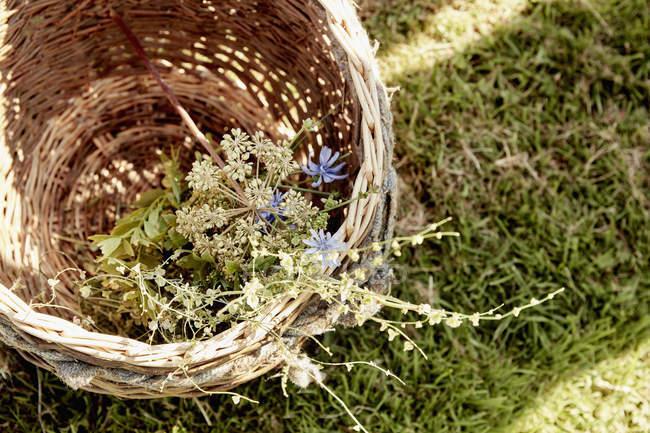 Cestino di vimini delle piante — Foto stock