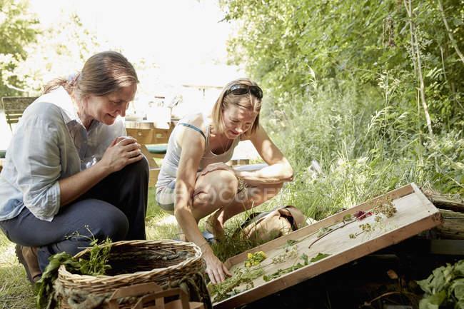 Femmes à la recherche au jardin d'été — Photo de stock