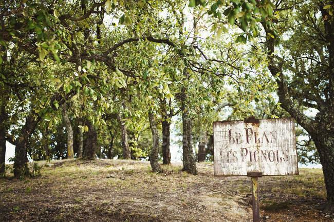Frutteto con alberi secolari di frutta — Foto stock