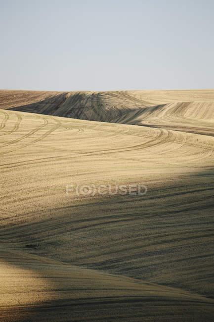 Збір врожаю — стокове фото