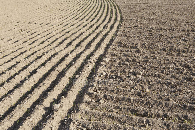Rows of planted farmland and soil — Stock Photo