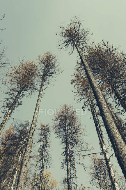 Fire damaged trees — Stock Photo