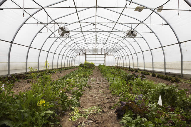 Large commercial plant nursery — Stock Photo