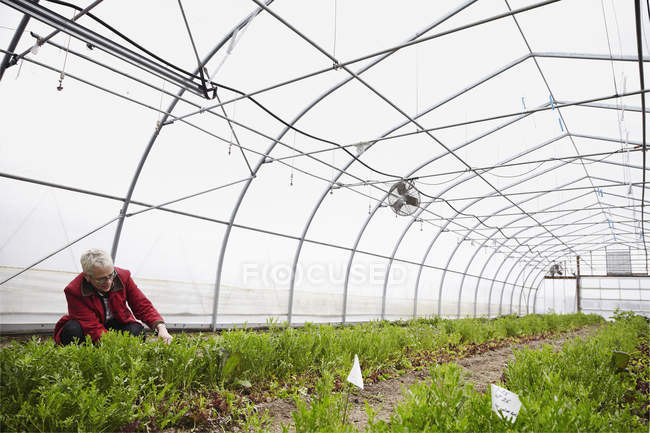 Woman working with plants — Stock Photo