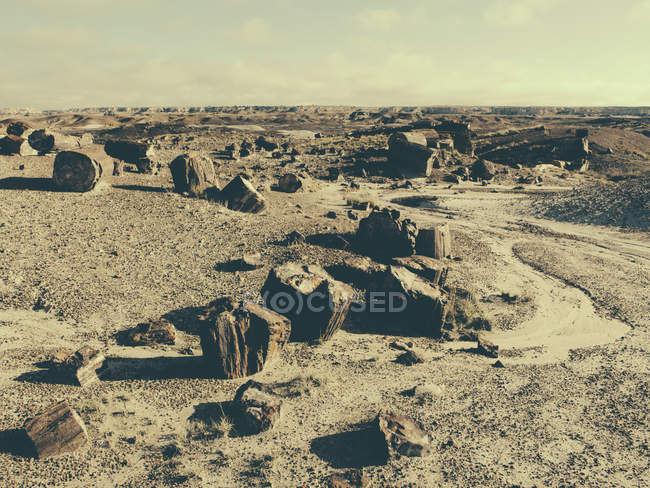 Fossilized trees at Petrified Forest National Park — Stock Photo