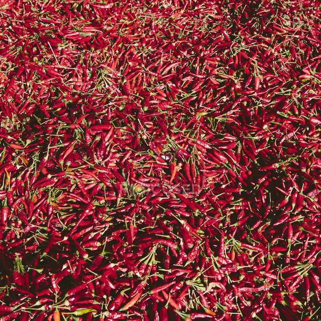 Pimientos rojos de Chile - foto de stock