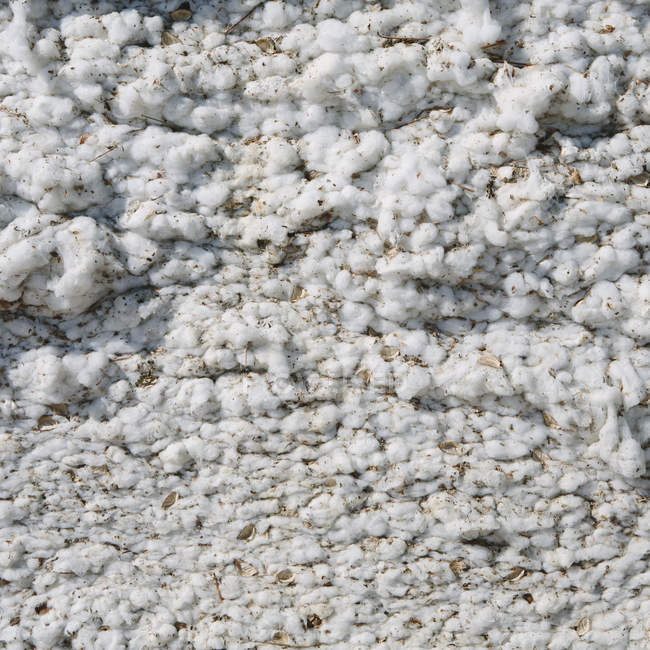 Close up of harvested cotton — Stock Photo