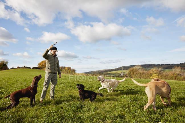 Выгульщик собак — стоковое фото