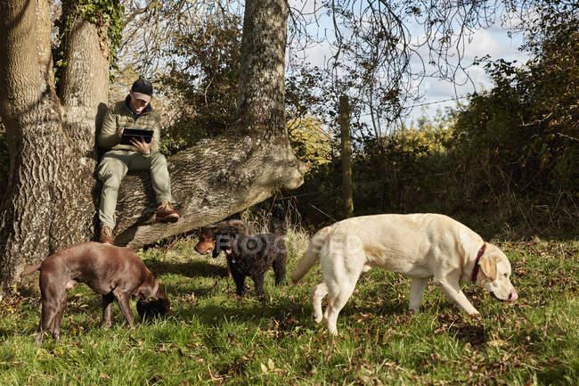 Собака ходок сидить на гілці дерева — Stock Photo