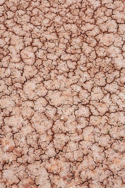 Lits fossiles John Day — Photo de stock