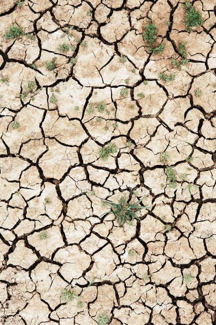 Superfície do solo seca rachada — Fotografia de Stock