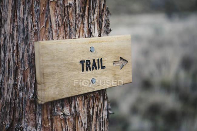 Panneau en bois sur l'arbre — Photo de stock