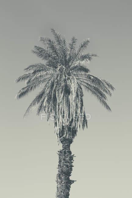 Oned зображення дерево пальми — стокове фото
