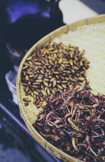 Vassoio di cavallette fritte e larva — Foto stock