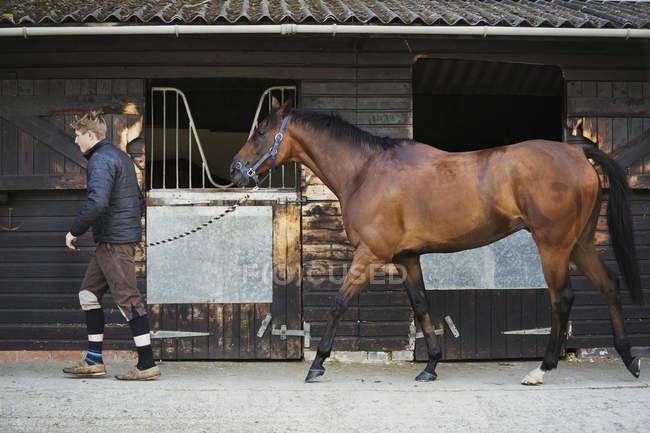 Человек в конюшне с лошадью — стоковое фото