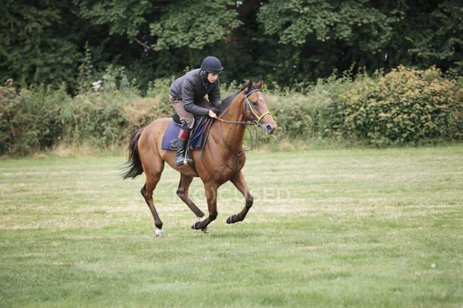 Человек на коричневой лошади скачет — стоковое фото
