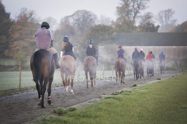 Grupo de jinetes en caballos marrones - foto de stock