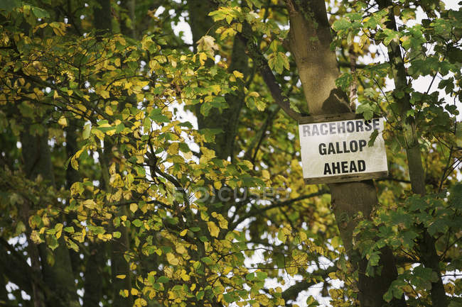 Sign in green tree — Stock Photo