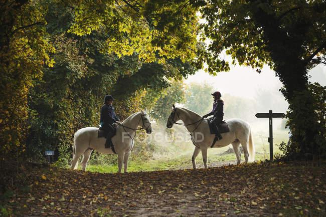 Dos jinetes en caballos blancos - foto de stock