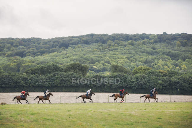 People on brown horses riding in field — Stock Photo