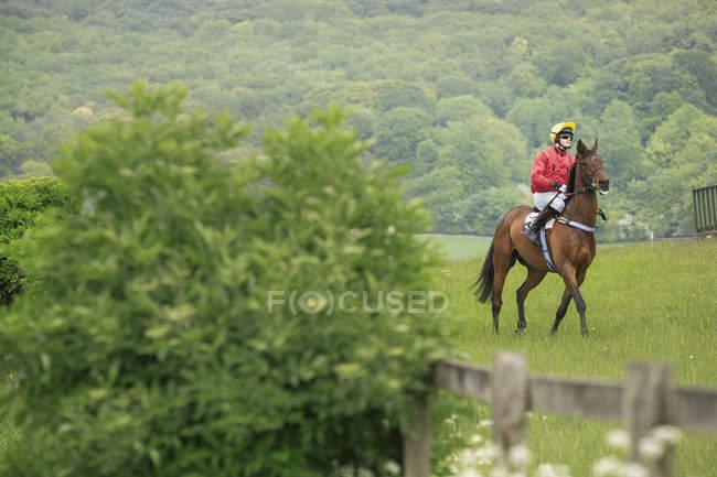 Jockey sobre caballo de carreras - foto de stock