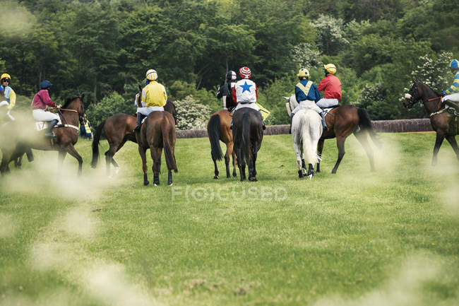 Group of riders on racehorses — Stock Photo