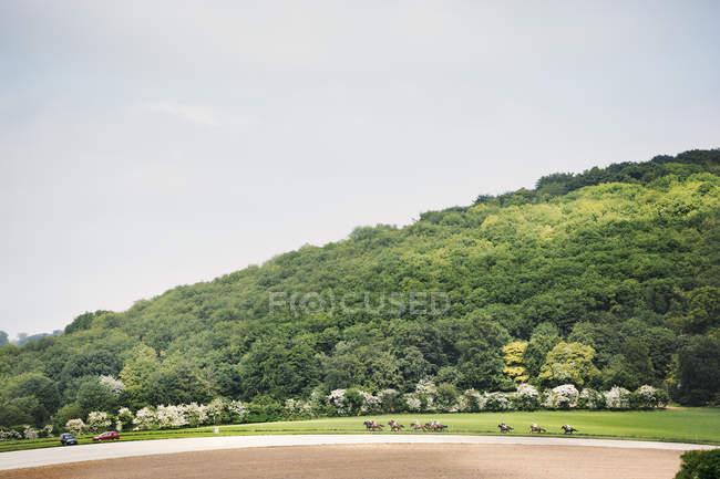 Fahrer auf Rennpferde beim Hindernislauf — Stockfoto