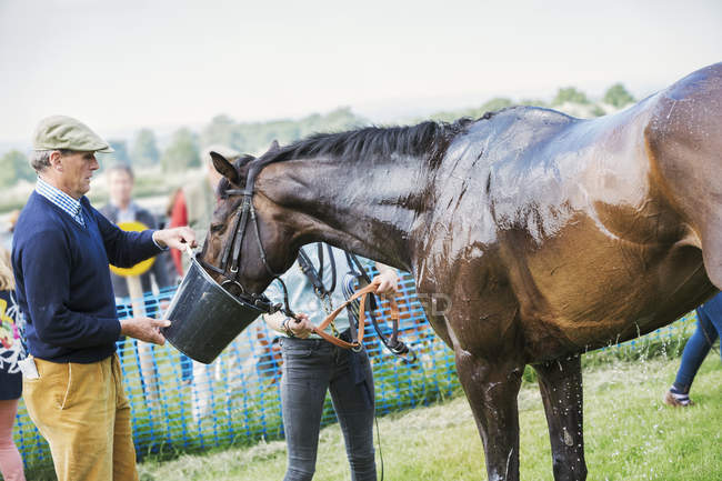 Man holding bucket to sweating horse — Stock Photo