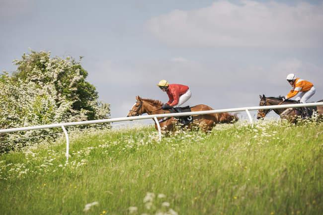 Dos jinetes en caballos de carreras - foto de stock
