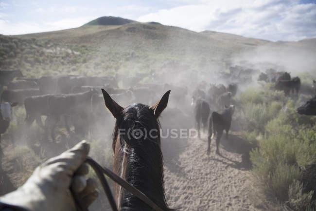 Perspectiva de vaquero a caballo - foto de stock