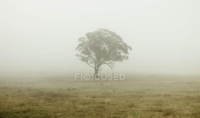 Tree in misty field — Stock Photo