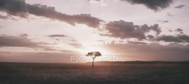 Arbre qui pousse dans les Prairies — Photo de stock