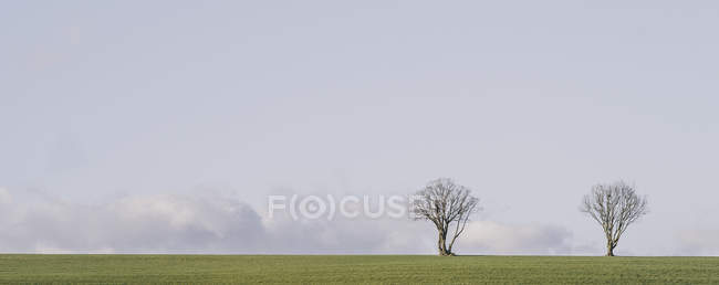 Two trees growing in field — Stock Photo