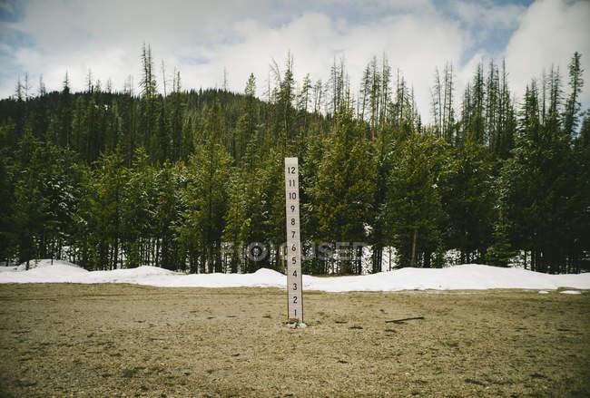 Plantation d'arbres sur la colline — Photo de stock