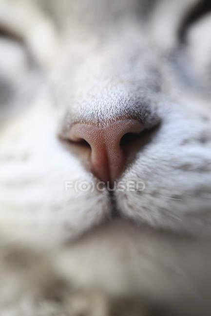 Primo piano del naso di gatto — Foto stock