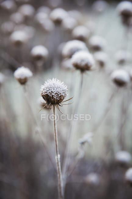 Plantas en el jardín en invierno - foto de stock