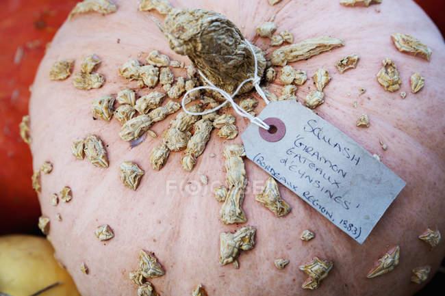 Zucche in serra in inverno — Foto stock